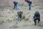 2008-04-14-barranco-de-la-bartolina-rosas-rojas-fotos-de-miguel-angel-capape-2