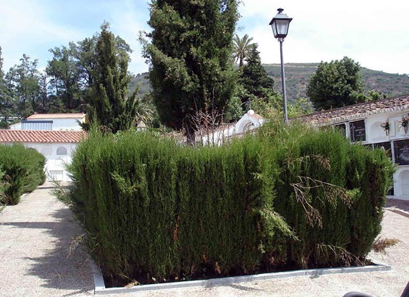 fosa-cubierta-hierbajos-planes-abrirla_EDIIMA20160327_0241_18